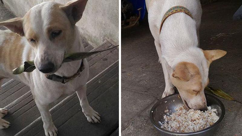 Poznajcie Tau Plu. Ten bezpański piesek wie jak się odwdzięczyć za jedzenie. Karmiącą go kobietę obsypuje prezentami. Jest rozbrajający!
