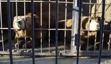 Gdy zobaczyli w jakich warunkach żyją te niedźwiedzie księżycowe, postanowili działać najszybciej jak się da. Musieli starać się aż 7 lat!