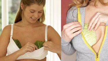 Kobiety wkładają liście kapusty za biustonosze. Gdy poznasz powód, możliwe, że zrobisz to samo! W tym szaleństwie jest metoda