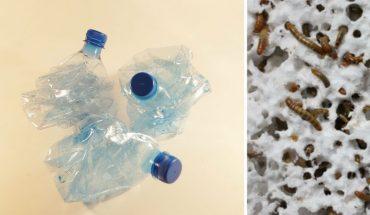 Naukowcy odkryli robaki, które zjadają plastik! Czy wreszcie to tworzywo sztuczne stanie się biodegradowalne?