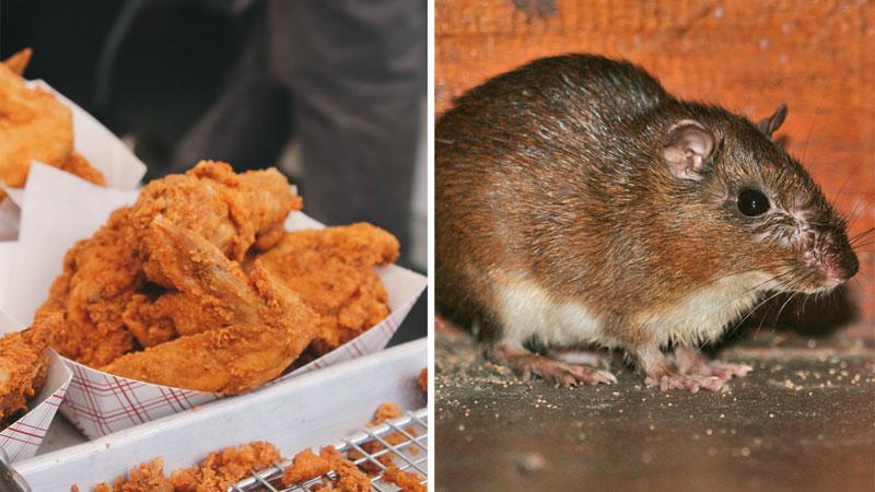 Klienci fast foodów są przerażeni: ponad 10 tysięcy ton sprzedanych skrzydełek było w rzeczywistości szczurzym mięsem!