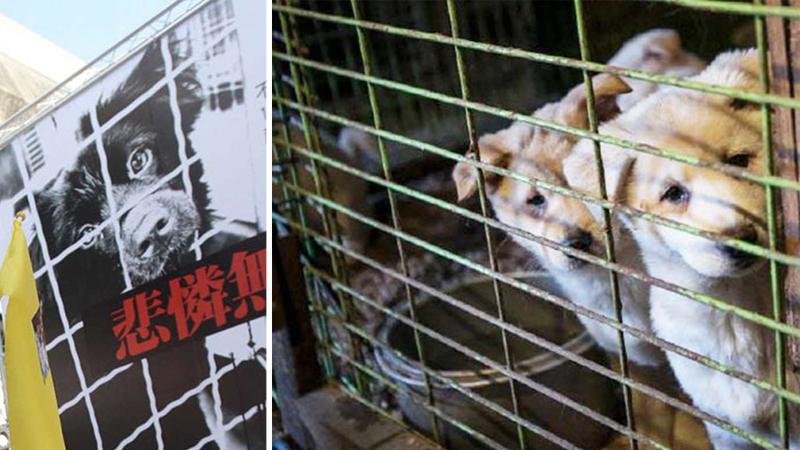 Tajwan powiedział nie, okrutnym żywieniowym nawykom! Władze państwa zabroniły jeść koty i psy. To pierwszy taki zakaz w Azji