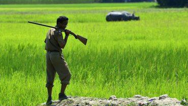Strażnicy chroniący nosorożce indyjskie zabili ponad 50 osób! Jedni uważają, że to sukces, a drudzy apelują, by nie przedkładać życia zwierząt nad życie ludzi
