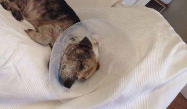 Przyszli do weterynarza i zażądali uśpienia psa. Jako przyczynę tej decyzji podali fakt, że pies jest… za brzydki!