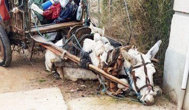 Wyczerpany osiołek ciągnął wielki drewniany wóz. Gdy półmartwy padł na ziemię, tylko nieliczni zainteresowali się jego losem!