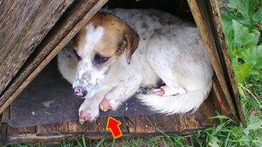 Jakiś zwyrodnialec poobcinał temu psu łapy! Na tym torturowanie się nie skończyło…