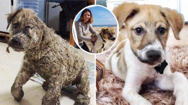 Pascal, pies, który został pokryty klejem i pozostawiony na śmierć, znalazł nową rodzinę po nadzwyczajnej transformacji