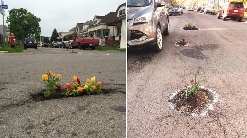 Sadzą kwiaty na drogach, bo miasta nie chcą łatać dziur. Ogrodnicza partyzantka zyskuje na popularności na całym świecie