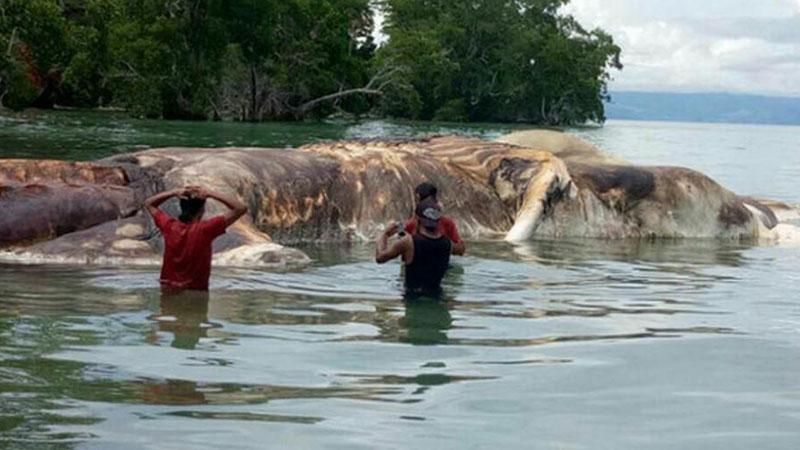 Na jednej z indonezyjskich plaż pojawił się dziwny obiekt. Mieszkańcy myśleli, że to wrak statku, ale gdy podeszli bliżej, przeżyli wstrząs