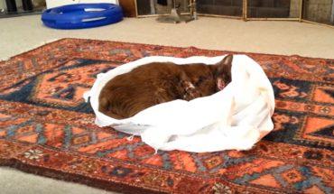 Wkłada martwego kota do worka i zostawia go w salonie. Chwilę później ktoś do niego podchodzi i robi TO!