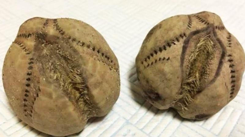 Znalazł te dziwne ziemniaki na plaży. Gdy się im dokładnie przyjrzał, zrozumiał wszystko!