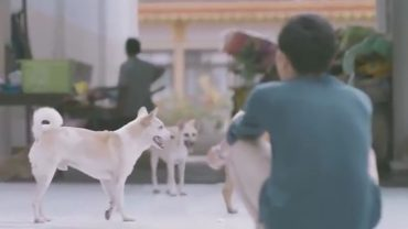 Podszedł na ulicy do bezdomnego psa i zrobił coś, czego nikt się nie spodziewał… Nietypowe zachowanie chłopaka pokazało ważną prawdę o czworonogach