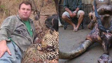 Karma wraca! Myśliwy zginął podczas polowania – zgniótł go słoń, do którego strzelał z przyjaciółmi