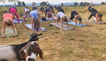 """Porzuciła pracę marketingowca, by zająć się… """"kozią jogą"""". Na jej zajęcia z tymi sympatycznymi zwierzętami zgłaszają się setki chętnych!"""