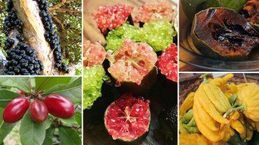 Pewnie nie słyszałeś o tych owocach, ale już nie długo będziesz się nimi zajadać. Zobacz, jakie egzotyczne nowości podbijają talerze na całym świecie