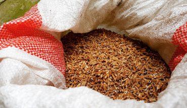 Badania pokazują, że jemy najgorszą część ziarna ryżu! To, co najlepsze idzie do pasz dla zwierząt!