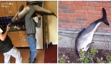 Irlandzcy studenci urządzili sobie imprezę z martwym ciałem delfina. Zwłoki wykorzystali jako rekwizyt. Tańczyli z nimi i wygłupiali się, a gdy im się znudziło, wyrzucili je przez okno…