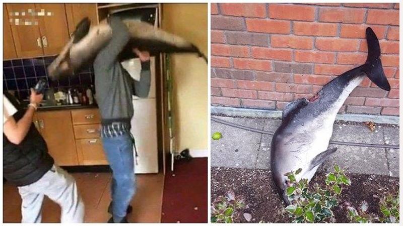 Irlandzcy studenci urządzili sobie imprezę z martwym ciałem delfina. Zwłoki wykorzystali jako rekwizyt. Tańczyli z nimi i wygłupiali się, a gdy im się znudziło, wyrzucili je przez okno...