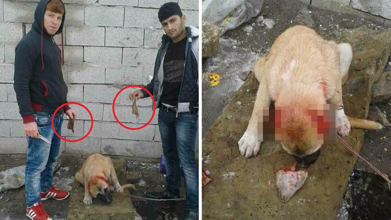 Dla zabawy obcięli dorosłemu psu uszy! Teraz tysiące internautów próbuje ustalić ich adres zamieszkania, więc kara na pewno ich nie ominie