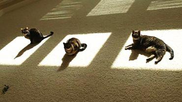 """""""Zmarznięte"""" koty, które zrobią wszystko, by znaleźć źródło ciepła! Zimno im nawet w lecie"""