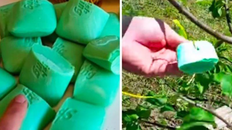 Przecięła kilka mydeł na pół i umieściła je w ogrodzie. W ten sposób pozbyła się paru nieproszonych gości!