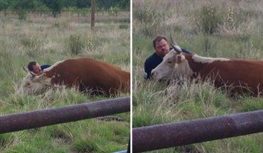 Ujrzał wycieńczoną krowę, która upadła i przestała się ruszać. Kiedy do niej podszedł i zobaczył, co się stało, czule ją przytulił