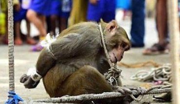 Głodna małpka skradła ze straganu kilka owoców, ale kara jaką wymierzyli jej ludzie, była bardzo okrutna