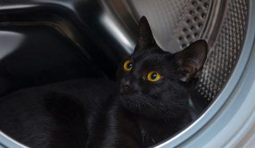 Kot się ubrudził, więc trzylatka wsadziła go do pralki i włączyła urządzenie. Kiedy dorośli odkryli, co się stało, zwierzę już nie żyło