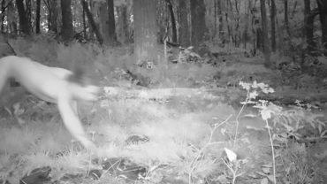Mężczyzna z Czech przebiegł na golasa Polskę i Niemcy. Myślał, że jest tygrysem syberyjskim!