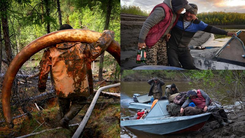 Tak żyją syberyjscy poszukiwacze mamucich kości. Ciężka praca i morze alkoholu, czy to warte pieniędzy za znaleziska?