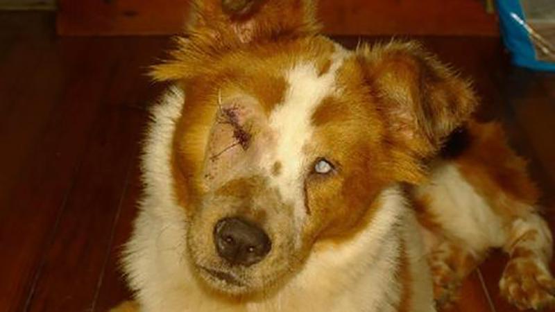 Był zbyt zajęty torturowaniem ślepego kundla, by dostrzec to, co dzieje się za jego domem. To dowód, że karma wraca?