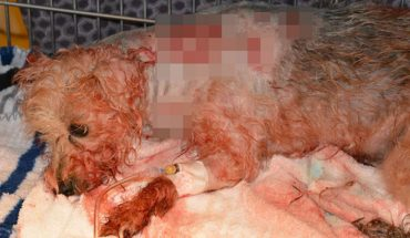 Policja dostała wezwanie do dziwnie zachowującej się kobiety z psem. Gdy funkcjonariusze przybyli na miejsce, znaleźli czworonoga z 19 ranami kłutymi!