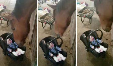 W stadninie znajomego matka tylko na chwilę spuściła z oka swoją córeczkę. Kiedy spojrzała później, koń robił to…