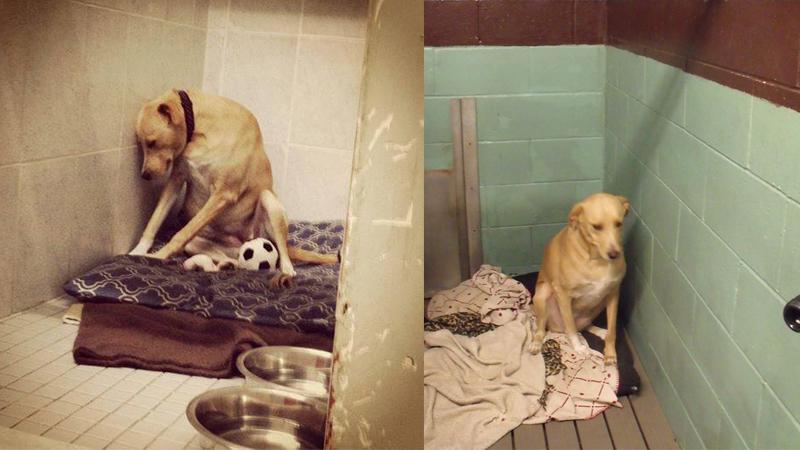 """Historia """"najsmutniejszego psa na świecie"""" pokazuje, że zwierzęta mają uczucia i nie wolno myśleć o nich, jak o zabawkach"""
