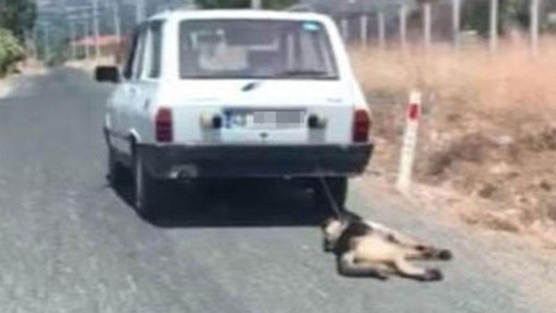 Mężczyzna przywiązał swojego psa do samochodu i ciągnął go przez kilka kilometrów! Miejsce akcji? Turcja, gdzie prawa zwierząt są nagminnie łamane