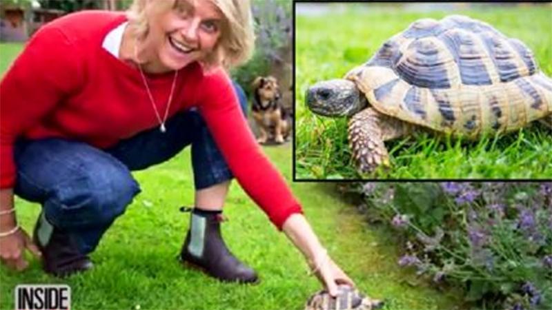 Żółw przeszedł mnóstwo kilometrów, aby odnaleźć właścicieli. Gdy po 2 latach zjawił się w ich starym domu, wszyscy oniemieli!
