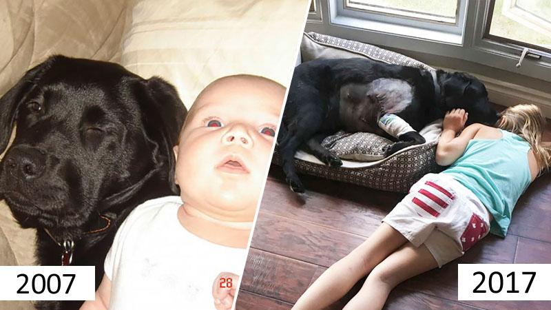 Bobas i szczeniak to dobre połączenie? Zdjęcia tej pary pokazują, że wprost idealne!