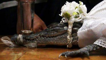 Burmistrz meksykańskiego miasteczka poślubił krokodylicę. Panna młoda wyglądała zjawiskowo!