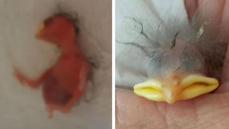 Susan znalazła w ogrodzie rozbite jajko i chciała je wyrzucić, lecz skorupka nie była pusta... Sprawdźcie, co wyrosło z uratowanego maleństwa