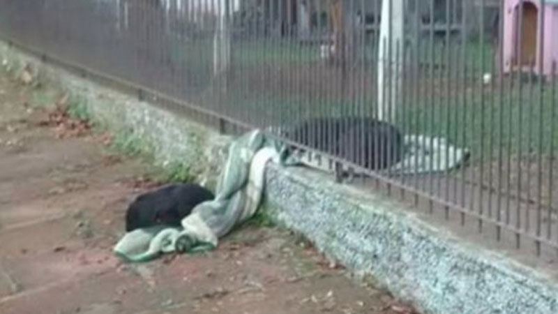 Psiak wyciągnął koc z budy i podzielił się nim z bezdomnym kolegą! To zdjęcie podbiło serca internautów