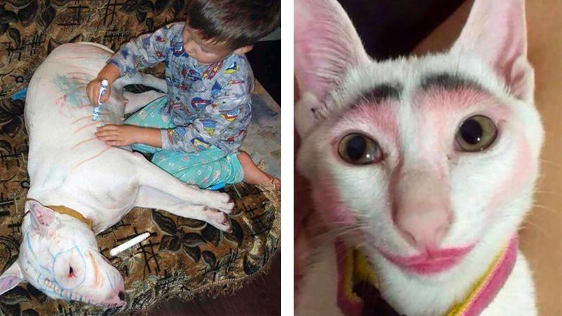 Dlaczego nie powinniśmy zostawiać dzieci ze zwierzętami? Oto 14 naprawdę śmiesznych powodów!