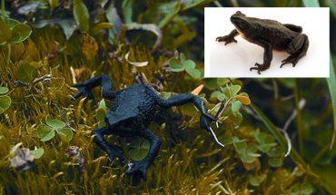 Chłopiec z Ekwadoru uratował gatunek, który został uznany za wymarły 30 lat temu! Dzięki jego odkryciu będzie można odbudować populację!