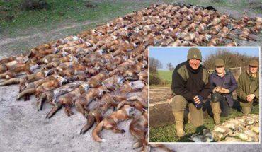 """""""Ktoś mnie pobije?"""" – spytał wyzywająco myśliwy, pozując z 100 zabitych lisów. Ma się czym chwalić?"""