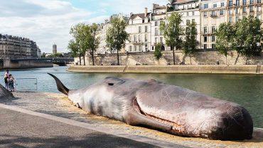 Martwy kaszalot w samym środku Paryża! Ludzie nie mogli zrozumieć, skąd się tam zalazł. Po chwili wyjaśniło się wszystko