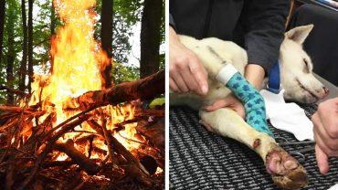 Dzieci wrzuciły szczeniaka do ogniska! Pies ledwo uszedł z życiem a małolaty nie poniosły za to żadnej kary