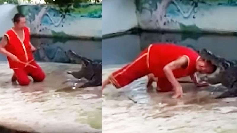Show w Tajlandii pokazało, że igranie z krokodylami ma swoją cenę, która może być równa życiu tresera!