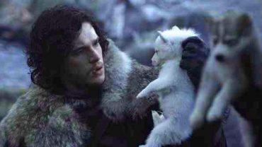 """Fani zainspirowani """"Grą o tron"""" wyrządzają zwierzętom ogromną krzywdę. Czy coś wreszcie się zmieni?"""