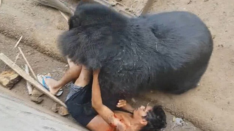 Chciał się popisać odwagą i drażnił głodnego niedźwiedzia. Wystarczył moment, by gorzko pożałował swojej głupoty