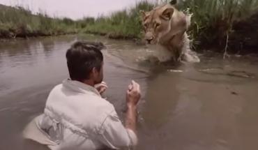 Wszedł do jeziora i nagle usłyszał coś w pobliskich krzakach. Po chwili skoczył na niego lew