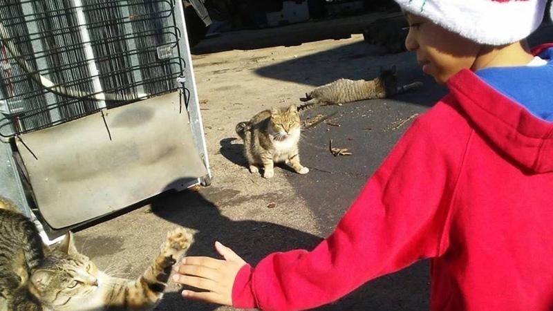 5-latek stał się super bohaterem dla bezdomnych kotów! To, co robi jest bezcenne!